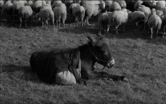 "The climax of Robert Bresson's ""Au Hasard, Balthazar"""